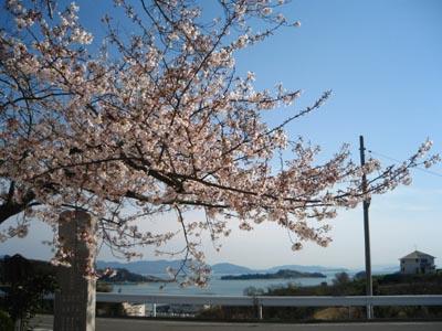 海と桜の絶景!